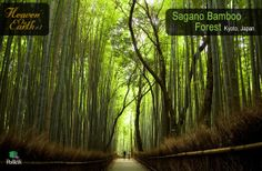 """1.Sagano Bamboo Forest, Kyoto, Japan It is one of the most amazing natural sites in Japan. One of the most interesting facts about Sagano is the sound which the wind makes while it blows amongst the bamboo. Amazingly enough, this sound has been voted on as one of the """"one hundred must-be-preserved sounds of Japan"""" by the Japanese Government.  Another interesting fact – the railing on the sides of the road is composed out of old, dry and fallen parts of bamboo."""