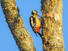 Blissful Solitary Wanderings: Winter Birding 1 - Woodpeckers & Others
