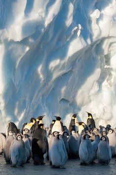 Penguins enjoying the beauty of nature!