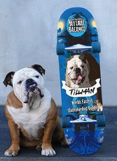 Tillman with his board. This dog is awesome, he is sooo smart!!