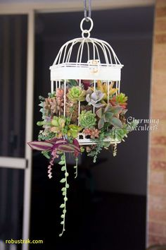 72 Stunning Birdcage Flower Planters - Unique Balcony & Garden Decoration and Easy DIY Ideas Hanging Succulents, Succulents In Containers, Cacti And Succulents, Hanging Plants, Indoor Plants, Hanging Scale, Succulent Arrangements, Diy Hanging, Birdcage Planter