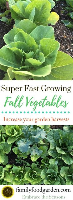 Fall Vegetables that Grow Super Fast ~ Family Food Garden