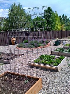 Trellis between raised beds.