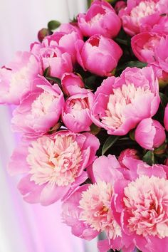 Peonies- state flower for Indiana