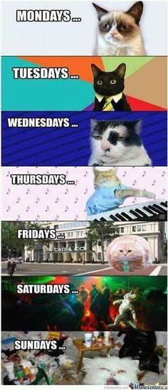 Gatos! (: