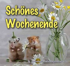 Sonniges Wochenende 🌞! German Quotes, Wishes For You, Weekend Fun, Dance Quotes, True Words, Good Morning, Photos, Teddy Bear, Funny Quotes