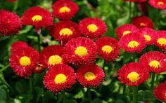 Resultado de imagen de flowers