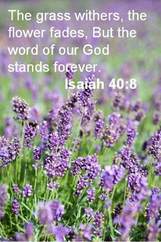 """The grass withers and the flowers fade, but the word of our God stands forever."""" - Isaiah 40:8 (NLT Bible)"""