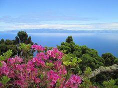 Insider Tips to Pico Island, Azores, Portugal - by Nancy D. Brown Photo: Pico Island, Azores, Portugal