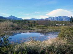 Helderberg Nature Reserve with Hottentots Holland Mountains in the far distance. Somerset West, Nature Reserve, Conservation, South Africa, Distance, Holland, National Parks, Landscapes, Places To Visit