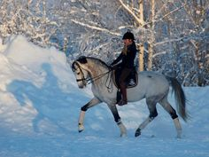 A winter ride... i will get another horse and ride in the snow!