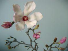 magnolia branch 2