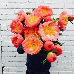 Flowers By Brett Matthew John (@flowersbybrettmatthewjohn) • Instagram-kuvat ja -videot