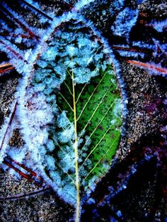 colorful coldness