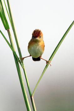 balanc, anim, funni, birdi, natur, split, smile, feather, birds