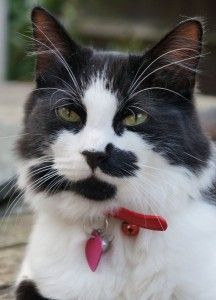 Marco (now Po) - Cat - The Mayhew Animal Home
