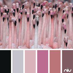 crowded of flamingos (fauna)