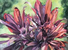 An original watercolor painting on paper of ti leaves in Hawaii by Colleen Sanchez, x So lucky to be able to paint these gorgeous backlit red ti plants from a park in Waikiki. Obsessed with tropical plants. Wildlife Paintings, Seascape Paintings, Watercolor Artists, Watercolour Painting, Flower Artwork, Arte Popular, Large Flowers, Painting Frames, Original Paintings