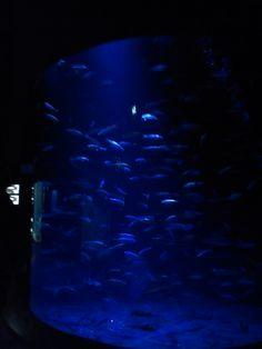 Stralsund Ozeaneum Northern Lights, Nature, Travel, Pictures, City, World, Naturaleza, Viajes, Destinations