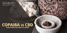 CBD and copaiba oil have many similarities, but also some fundamental differences. Understanding the nuances of each will lead to more effective decisions for your own health and wellness. Find out which is better for you.