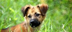 Free Pictures, Free Images, Public Domain, Mammals, Dogs And Puppies, Pets