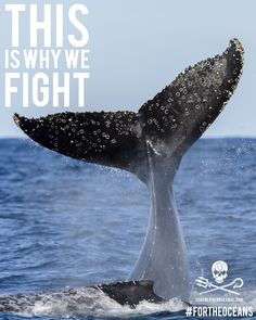 Whale tail fluke! #SeaShepherd