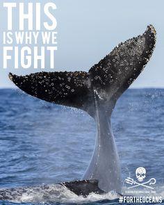 Whale tail fluke! #SeaShepherd