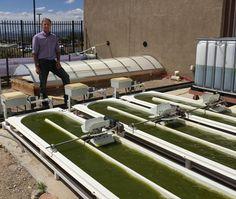 Luke Spangenburg leads the algae program as Director of the Santa Fe Community College Center of Excellence for Biofuels. Center Of Excellence, Community College, Future Tense, College