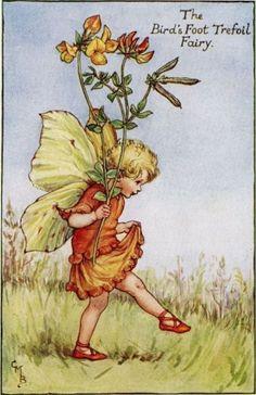 The Bird's Foot Trefoil Fairy by Cicely Mary Barker
