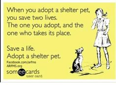 And this is why we rescue most of our adoptable pets from kill shelters. Every one of them needs a chance! Interested in fostering a dog or cat with us? Check out our Fostering Info on our website and consider filling out an application! http://animalrescueoftherockies.rescuegroups.org/info/display?PageID=3366    We always welcome new members of the ARR family!