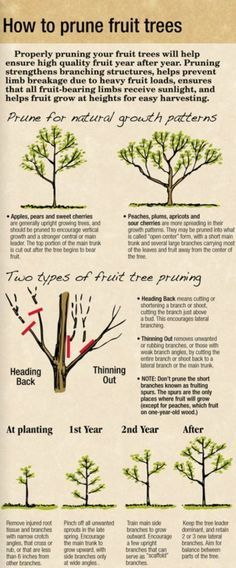 71 Best Pruning Fruit Trees Images