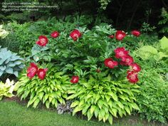 I love this Idea: using a supporting plant for the Peony's- cuz they always lean over. the light green also offsets the colors very well. I think it's a good pairing!!!