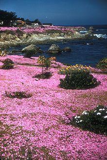 Pacific Grove, California