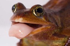 frogs_tongue-Angi-Nelson-image