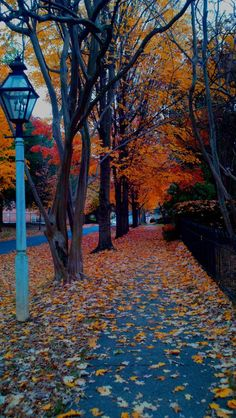 flowersgardenlove:  Fall leaves Beautiful