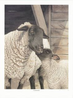 Mama Sheep ~ Joan Arnold