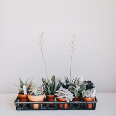 Mini Cactus and Mini Planter Lino Mini Cactus Kit Indoor Cactus Plants, Small Indoor Plants, Indoor Flowering Plants, Little Plants, Garden Plants, House Plants, Pot Plants, Mini Plants, Indoor Garden