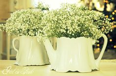 baby's breath in old cream jugs