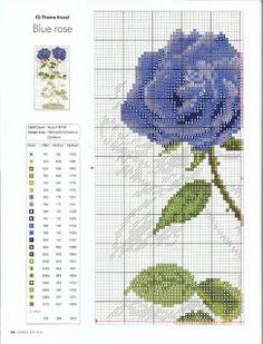 Blue rose1