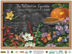 The Pollination Equation Pollinator Poster2009. Credit: Steve Buchanan