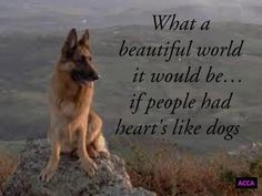 German Shepherd...What a beautiful world it would be...if people had hearts like dogs