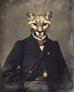 """Cat Art Print, Wildlife, Cougar Mountain Lion, Woodland, Animal Photography, Collage, Victorian Steampunk, Anthropomorphic, """"Chadwick"""" on Etsy, $25.00"""
