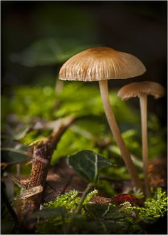 Fungi at Daybreak by Mark Shoesmith on 500px