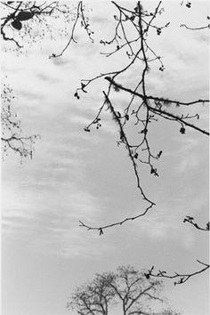 Robert Adams | The Place We Live | Yale University Art Gallery - Pacific County, Washington, ca. 2005