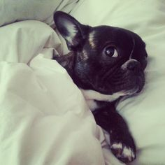 Just go. I will stay here and protect your bed. #frenchie