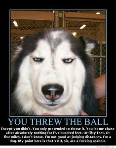 you threw the ball, except you didnt. You only pretended to throw it...... #catsareassholes