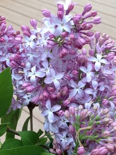 And the scent of lilac is on the breeze! www.purplepottingshed.com