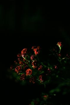 Nice & Quiet: Red