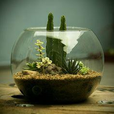 Além de objetos de decoração, Os MiniMundos nos chamam a atenção para a grandeza da natureza e todo o universo que habita num simples musgo.