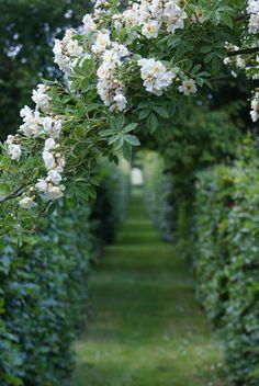 The secret garden Garden Care, Garden Paths, Garden Landscaping, Garden Arbor, Dame Nature, White Gardens, My Secret Garden, Hidden Garden, Parcs